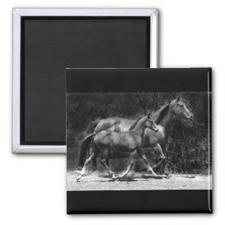 mare and foal square magnet
