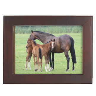 Mare And Two Colts Keepsake Box