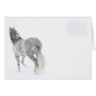 Mare in a Blizzard II Horse Greeting Card
