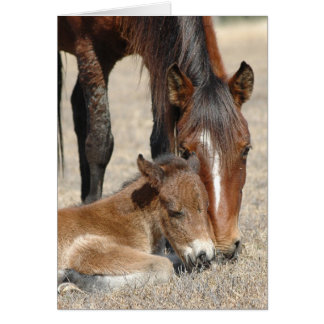 Mare With Colt Card