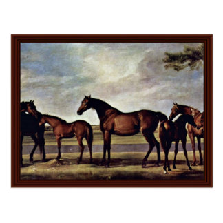Mares And Foals Anxious Before An Impending Storm Postcard
