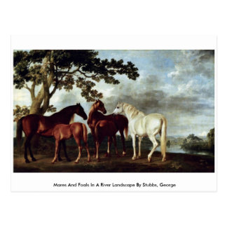 Mares And Foals In A River Landscape Post Card