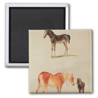 Mares and foals fridge magnets