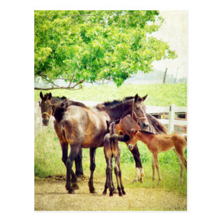 Mares and Foals Postcard