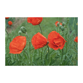 Margaret's Poppy Canvas