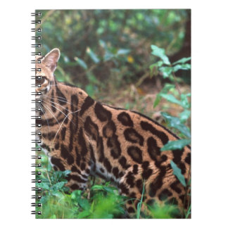 Margay, Leopardus wiedi, Native to Mexico into Note Books