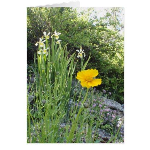 Marguerite jaune et iris blancs cartes