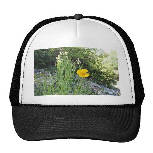 Marguerite jaune et iris blancs casquette