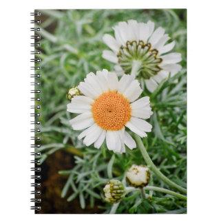 Marguerite Notebooks