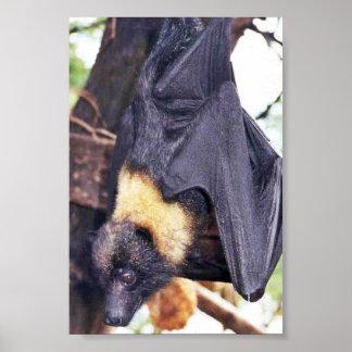 Mariana Fruit Bat Poster
