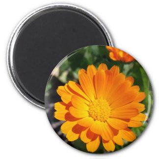 marigold flower magnet