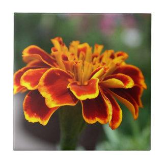 Marigold in Full Bloom Tile