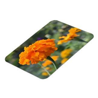 Marigold Orange Flower Nature Photography Garden Magnet