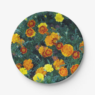 Marigolds 22 paper plate