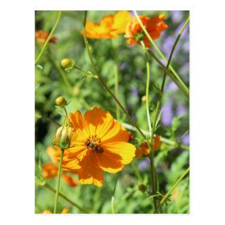 Marigolds # 6 postcard