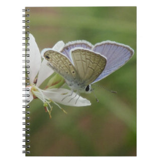 Marine Blue Butterfy on Gaura Bloom Notebook