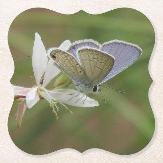 Marine Blue Butterfy on Gaura Bloom Paper Coaster
