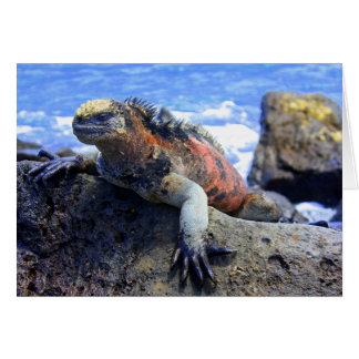 Marine Iguana Card