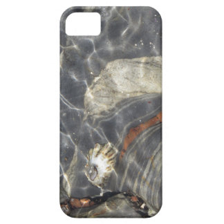 Marine Life at Point Lobos iPhone 5 Cases