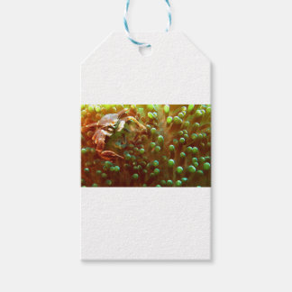 Marine life in the blue ocean water pack of gift tags