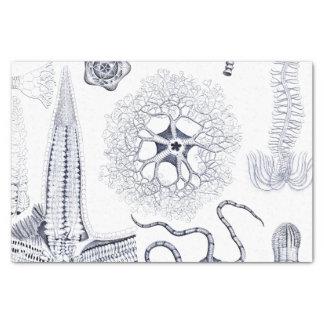 Marine Life / Marine Biology Strange Sea Creatures Tissue Paper