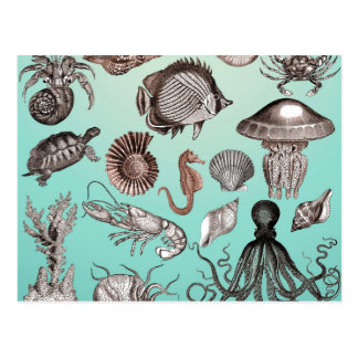 Marine Life Postcard