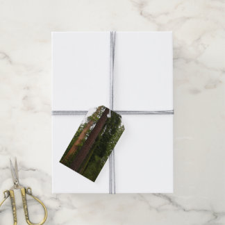 Mariposa Grove in Yosemite National Park Pack Of Gift Tags
