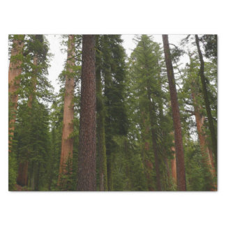 Mariposa Grove in Yosemite National Park Tissue Paper