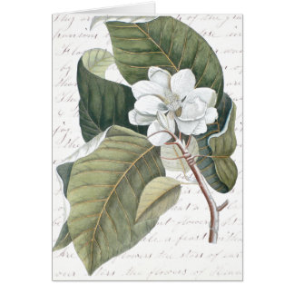 Mark Catesby Magnolia Collage w/ Essay on Flowers Card