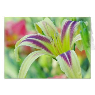 Marked Lily - Daylily Card