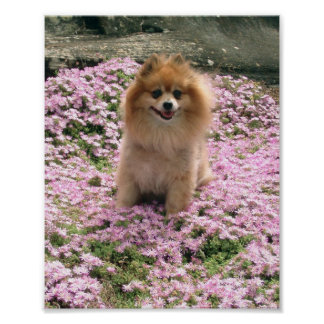 Marley with Pink Flowers Poster