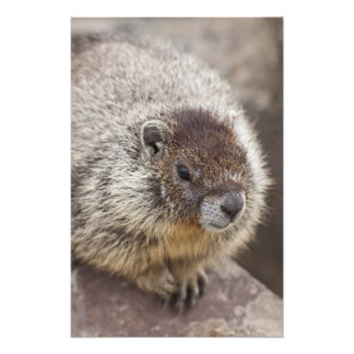 Marmot at Palouse Falls State Park Art Photo