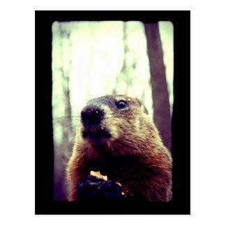 Marmot in Contemplation Postcard