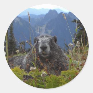 marmot in paradise classic round sticker