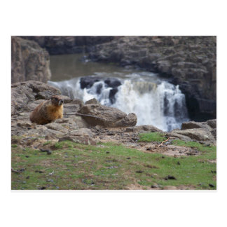 Marmot next to Palouse Falls Postcard