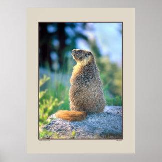Marmot on Boulder - Sierra Nevadas California Poster