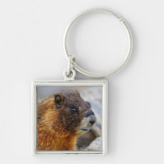 marmot portrait Silver-Colored square keychain