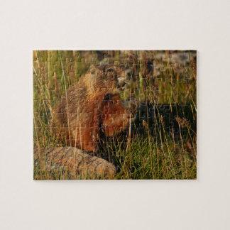 marmot puzzles
