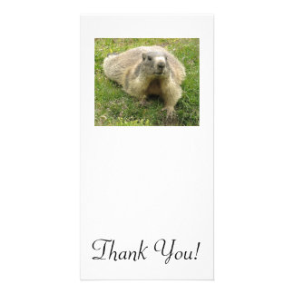 Marmot With Ticked Coloration And Cool Paws Customized Photo Card