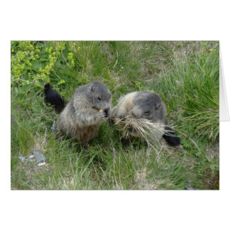 Marmots greeting card