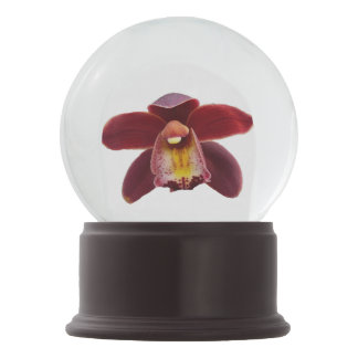 Maroon Orchids I Beautiful Red Floral Snow Globe