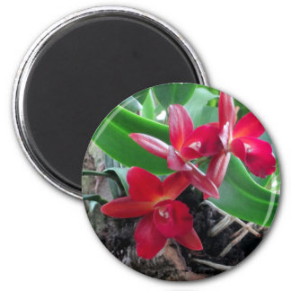 Maroon Orchids with Oval Framing 2 Inch Round Magnet