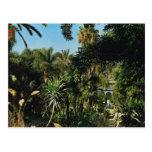 Marrakesh, Majorelle gardens, Morocco Postcard