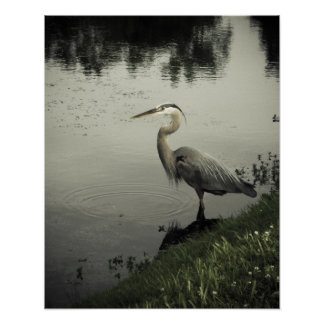 Marsh Bird on the Shore Poster