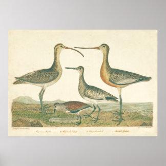 Marsh Birds Curlew Snipe Wetland Poster