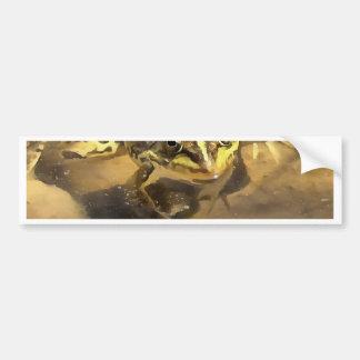 Marsh Frog Bumper Sticker