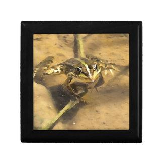 Marsh Frog Gift Box