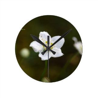 Marsh grass of Parnassus (Parnassia palustris) Clock