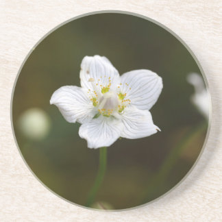 Marsh grass of Parnassus (Parnassia palustris) Drink Coasters