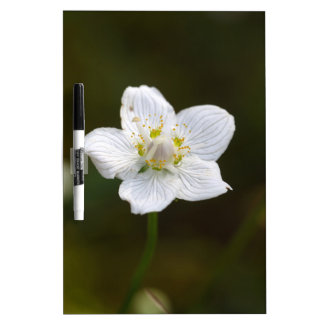 Marsh grass of Parnassus (Parnassia palustris) Dry Erase Board